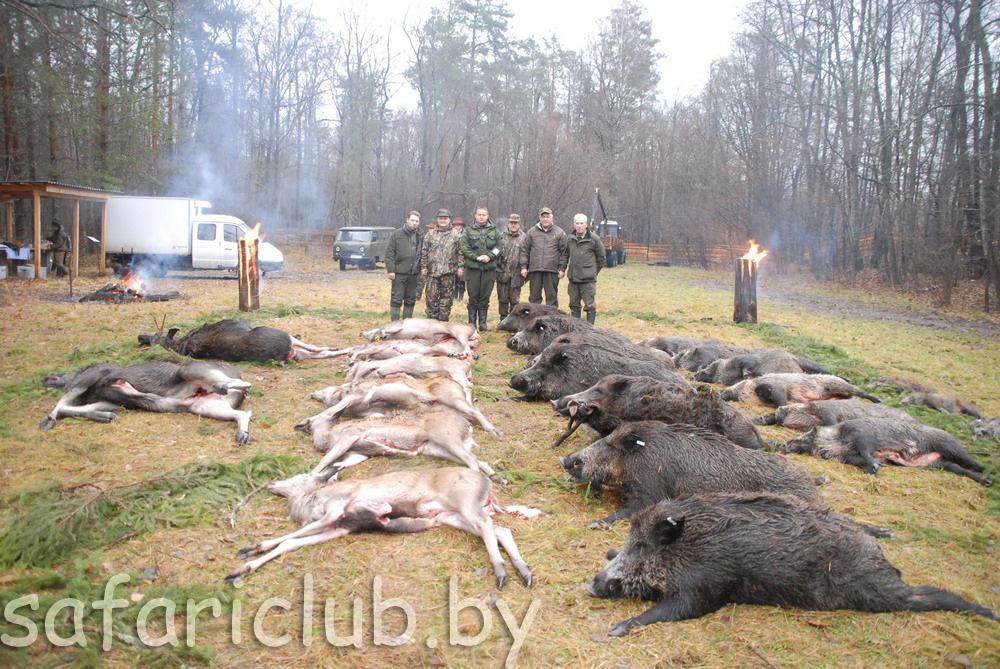 Лист инструктажа при охоте на диких копытных животных решил